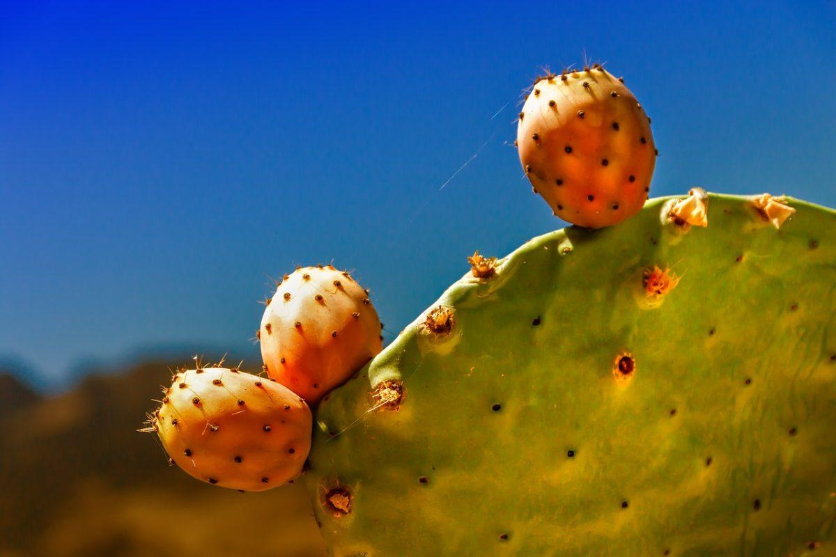 cactus-4257285_1280
