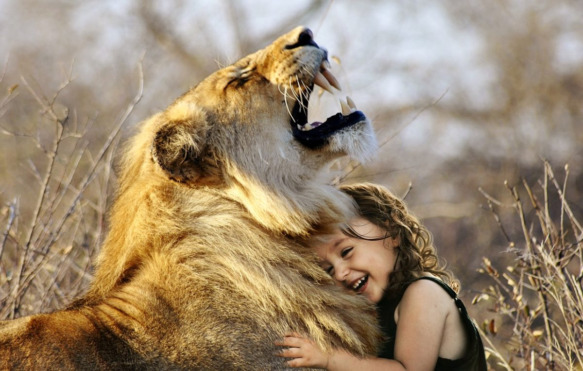 lion-3012515_1280.jpg